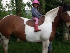 All Rounder horse - 7 yrs 15.2 hh Coloured - West Midlands