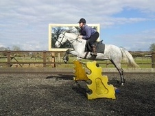 All Rounder horse - 4 yrs 4 mths 13.2 hh Grey - Berkshire