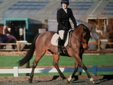 Stunning 16.1h Event horse needs experienced rider to hack/school...