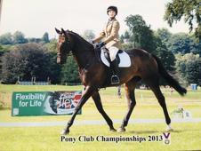 5* loan home wanted for ex advanced eventer