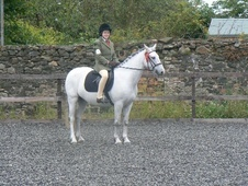 All Rounder horse - 12 yrs 10 mths 13.2 hh Grey - Perthshire