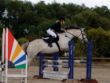 Competitive Irish Draught Mare, 16. 1hh, 13 Years