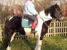 15. 1hh safe and steady happy hacker