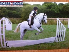 Spirit, 12. 2h, Welsh Section A, 14 years, Gelding - Oxfordshire