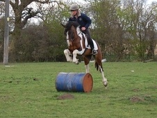 Eventers horse - 5 yrs 14.2 hh Skewbald - North Yorkshire