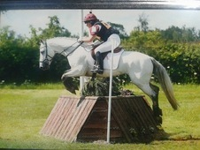 Handsome 14. 2hh 6yo Connemara X Gelding Super Event S/j Type