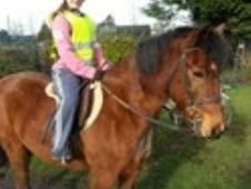 All Rounder horse - 16 yrs 13.0 hh Bay - East Sussex
