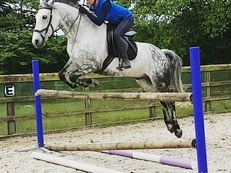 Quality Connemara gelding all-rounder/potential eventer for sale