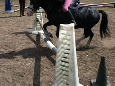 Family horse - 7 yrs 12.0 hh Black - Cheshire