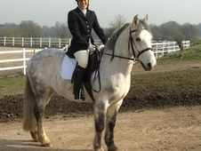 Super Riding Club/pony Club Allrounder