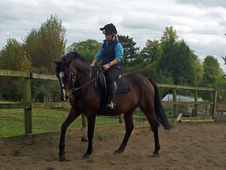 5 Yr Old Mare, Eventer Potential Ricardo Z / Puissance Breeding
