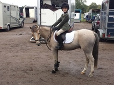 Fabulous 13hh Pony Club and allrounder Gelding