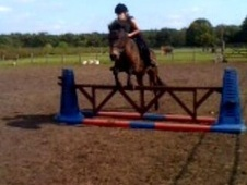All Rounder horse - 11 yrs 13.3 hh Bay Roan - Cheshire