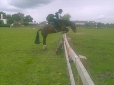 All Rounder horse - 19 yrs 14.1 hh Bay - Cheshire