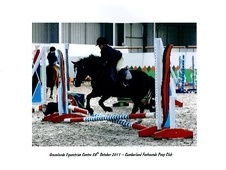 All Rounder horse - 14 yrs 12.2 hh Dark Bay - Cumbria