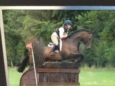 Eventers horse - 8 yrs 5 mths 17.2 hh Bay - North Yorkshire