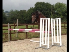 Top Show Jumping Youngster