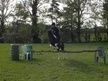 All Rounder horse - 8 yrs 7 mths 12.3 hh Coloured - Cheshire