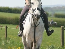 All Rounder horse - 8 yrs 15.1 hh Grey - Leicestershire
