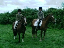 13. 1hh pony for sale or loan