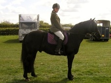All Rounder horse - 17 yrs 14.2 hh Black - Oxfordshire