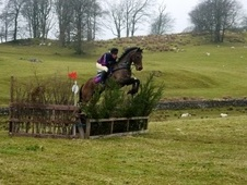 Ex Racehorses horse - 9 yrs 16.0 hh Bay - Cumbria