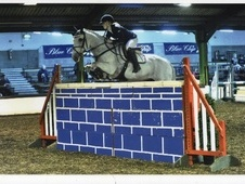 All Rounder horse - 12 yrs 8 mths 15.1 hh Grey - Lancashire