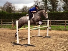 Proven hunter / excellent be eventing potential
