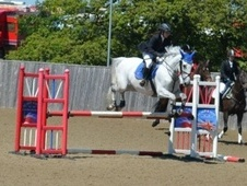 All Rounder horse - 12 yrs 16.3 hh Grey - Kent