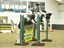 All Rounder horse - 16 yrs 2 mths 15.3 hh Skewbald - Buckinghamshire
