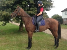 Beautiful Bay Tb Filly, 16. 1hh