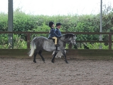 Registered Welsh Section A Dapple Grey 10. 2hh 5 Years Old