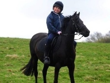 All Rounder horse - 12 yrs 12.3 hh Black - East Sussex
