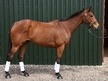 All Rounder horse - 6 yrs 16.2 hh Bright Bay - Suffolk