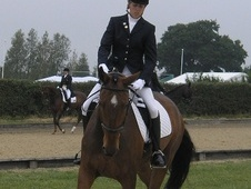 Dressage horse - 9 yrs 16.3 hh Dark Bay - Kent