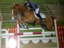 Show Jumpers horse - 7 yrs 3 mths 16.0 hh Chestnut - Nottinghamshire