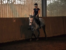 All Rounder horse - 8 yrs 10 mths 14.0 hh Grey - Cornwall