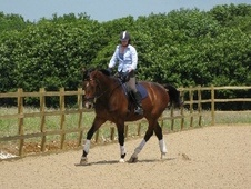 Dressage horse - 12 yrs 11 mths 17.0 hh Dark Bay - Kent