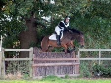 Pony Club Ponies horse - 10 yrs 14.2 hh Bay - Lincolnshire