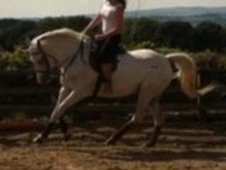 stunning riding/dressage pony