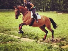All Rounder horse - 10 yrs 11 mths 16.0 hh Bay - Kent