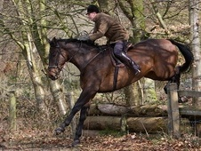 All Rounder horse - 8 yrs 17.2 hh Bay - Cheshire