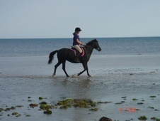 All Rounder horse - 17 yrs 1 mth 13.2 hh Black - East Sussex