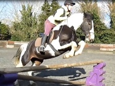 Riding Club Horses/Ponies horse - 7 yrs 15.2 hh Skewbald - West S...