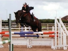 Show Jumpers horse - 11 yrs 16.1 hh Black - Lancashire
