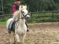 All Rounder - Mare - 13 hh - Norfolk