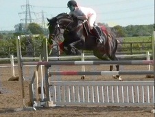 Stallions at Stud horse - 5 yrs 10 mths 16.0 hh Dark Bay - Lancas...