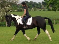 Absolutely Stunning 15. 1hh ( Life Height Measurement At 15hands ...