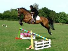 ****16yrs 1month, 15. 3hh, Bay, Gelding****