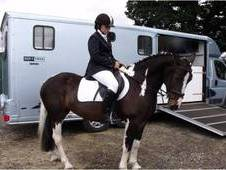 Stunning 15. 1 Tri-colour Mare